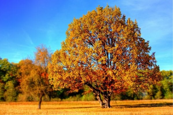 Fall Energy
