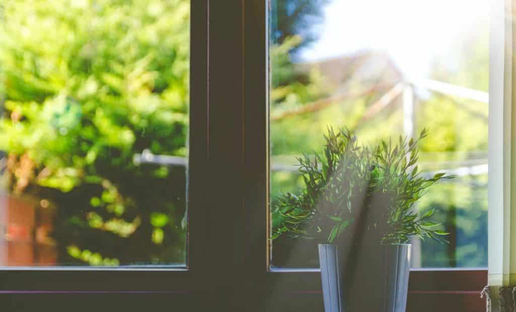 Plant getting sunlight next to window